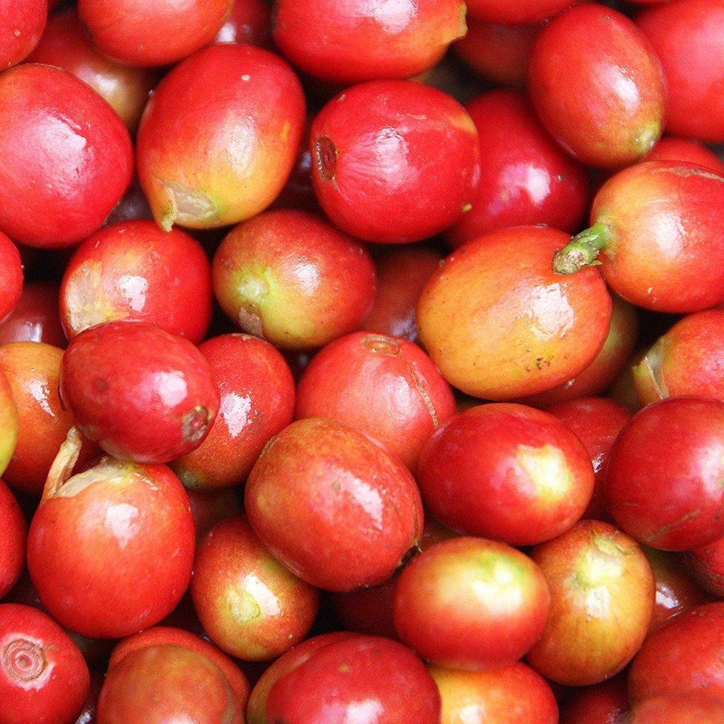 Nicaragua SHG Red Catuai 1024x1024 1