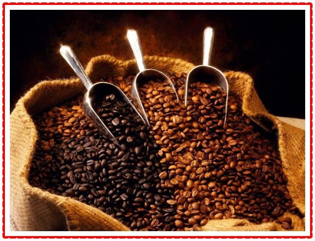 Ethiopian Queen City Harrar Grade 4 Coffee Beans